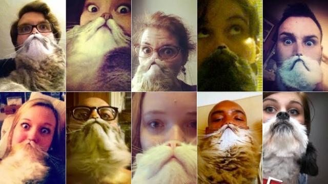 Cat Bearding!